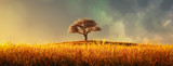 Fototapeta Landscape - lonely tree in a cultivated field