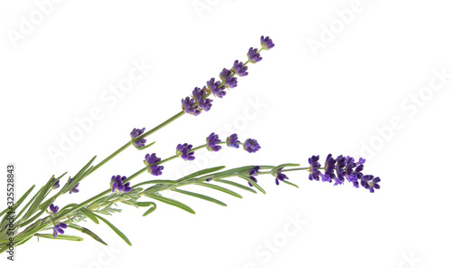 Fototapeta Lavender flowers in closeup. Bunch of lavender flowers isolated over white background. Awesome top view with purple lavender flowers close-up isolated on white background. obraz