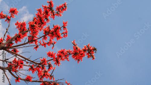 Photo natural flowers background of bastard teak flowers