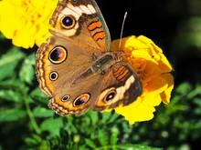 Macro Of Butterfly On Flower