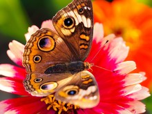 Macro Of Butterfly On Flower