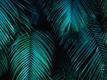 Tropical Palm Leaf Background