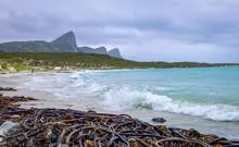 Huge Brown Kelp And Seaweed Wa...