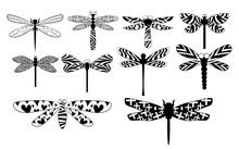 Dragonfly Vector Set Collectio...