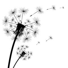 Panel Szklany Podświetlane Minimalistyczny Black silhouette of a dandelion on a white background