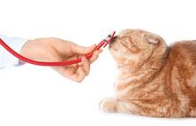 Veterinarian Examining Cute Cat On White Background