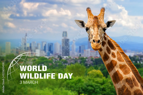 World Wildlife Day. Text on giraffe background Wallpaper Mural