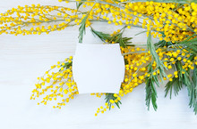 Mimosa Flower And Empty Card O...