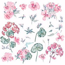 Collection Of Vector Pink Flowers And Leaves In Vintage Style For Design