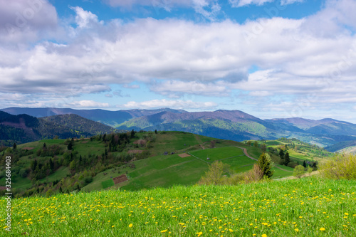 Obraz rolling hills and grassy meadows of mountainous countryside. beautiful rural landscape in springtime. sunny weather with clouds on the sky. ridge in the distance - fototapety do salonu