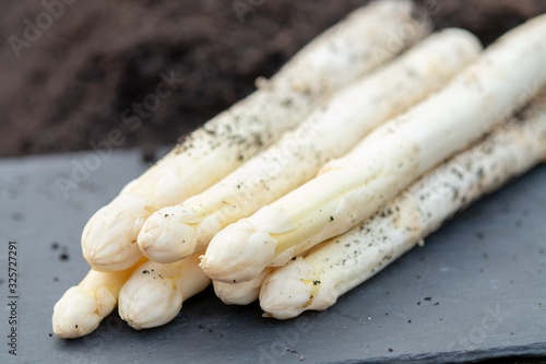 New harvest of white asparagus vegetable plant on farm fields in Netherlands and Canvas Print