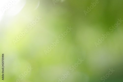Abstract Natural green bokeh is beautiful and blurred during the summer, which is a greenish bokeh taken from the leaves on a tree and has white light Canvas Print