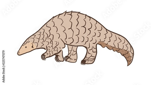 Cuadros en Lienzo Pangolin or scaly anteater, a scales covered mammal from tropical areas such as Africa and Asia