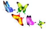Fototapeta Buterfly - butterfly433