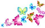 Fototapeta Buterfly - butterfly422