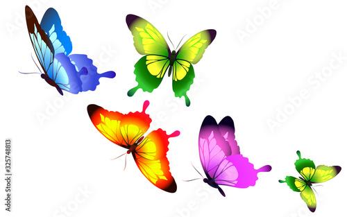 butterfly433