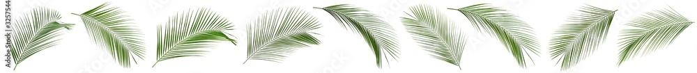 Fototapeta Set of tropical leaves on white background. Banner design