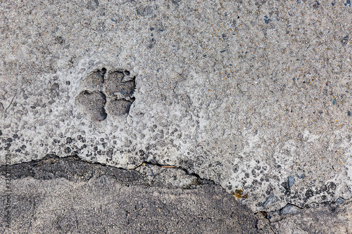 Valokuvatapetti .dog foot stamp on the cement in the road