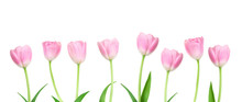 Pink Tulips Flowers In A Row ...