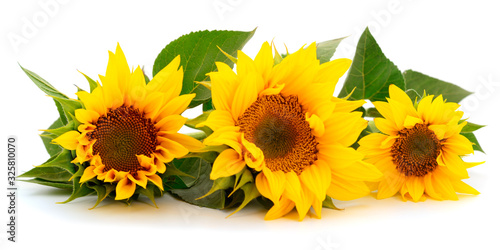 Fotografie, Obraz Group of yellow bright beautiful sunflower flowers.
