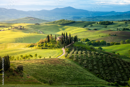 Country house on rolling hills in Val d'Orcia, Tuscany, Italy. Green meadow at springtime. - 325821269