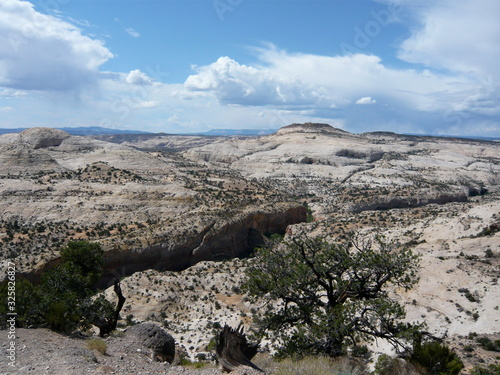 Fototapeta rounded sandstone mountains with shrubbery crevice and lone tree