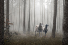 Two Sheep Standing Inside A Mystic Forest