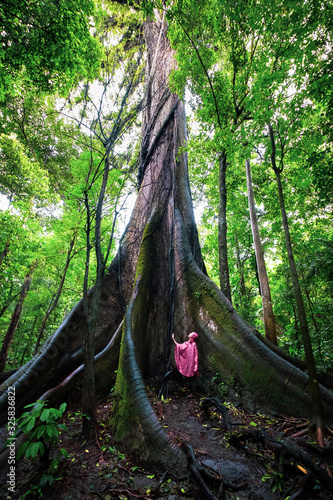 Arbre géant forêt tropicale Tapéta, Fotótapéta