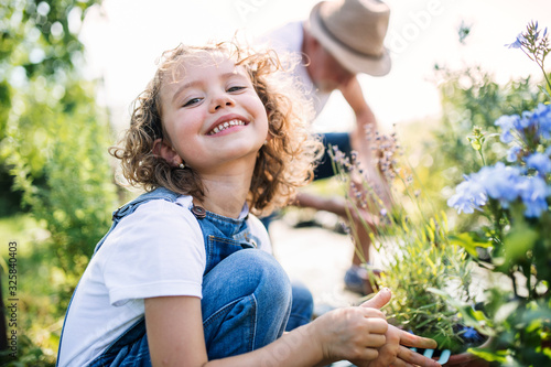 Leinwand Poster Small girl with senior grandfather in the backyard garden, gardening