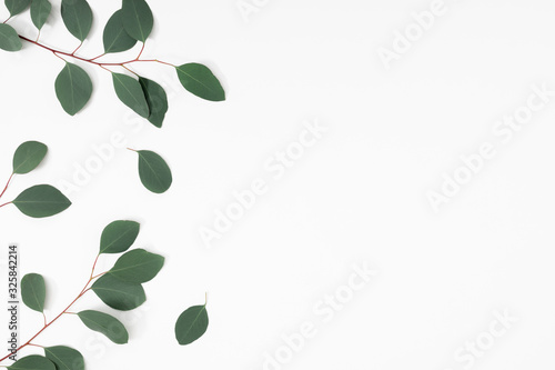 Obraz Eucalyptus branches and leaves on white background. Minimal composition of eucalyptus. Flat lay, top view, copy space - fototapety do salonu
