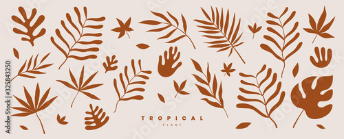 Obraz Set of exotic palm leaves of various shapes and sizes vector illustration on a light background. Tropical plants. Terracotta color plant collection in flat style. Elements for ecological design. - fototapety do salonu