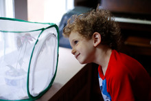Young Boy Watching Monarch Butterflies Emerge From A Chrysalis