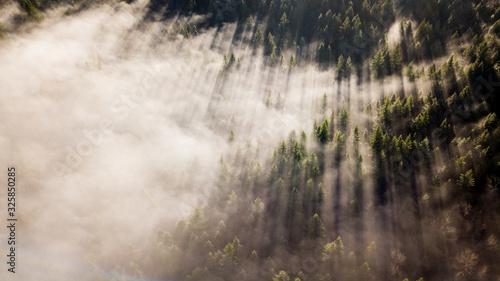 Stunning morning light cuts through the fog in Washington - 325850285