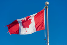 Canadian Flag Blowing In The W...
