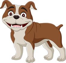 Cartoon Bulldog Isolated On White Background