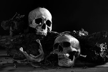 Skulls And Jaw Put On Decayed Timber In Old Room, Image Style Black And White Color