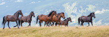 Wild Horses Roaming Free In Th...