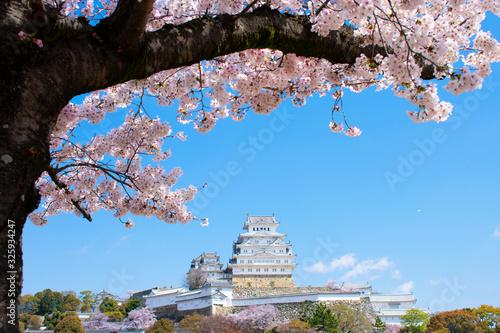 Photo 桜の姫路城