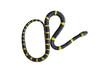 Banded krait or bungarus fasciatus snake isolated on white background
