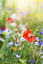 Beautiful Flower Meadow With W...