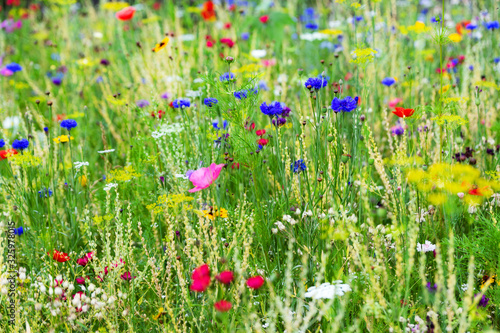 Butterfly meadow background, colorful native flower field - 325978015