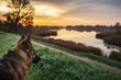 pies podziwiający jesienny wschód słońca nad jeziorem