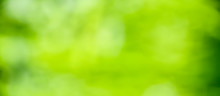 Spring Background - Abstract Green Background Banner