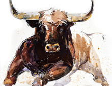 Bull. Animal Illustration. Wat...