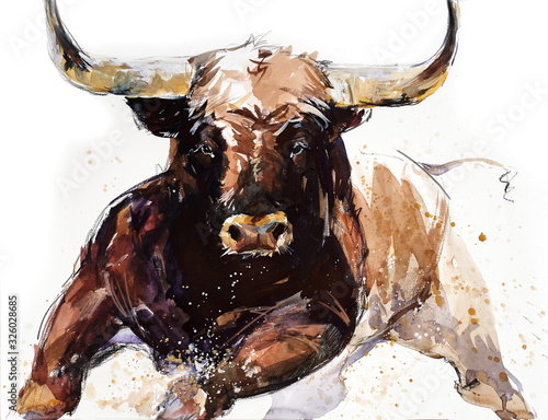 Bull. animal illustration. Watercolor hand drawn series of cattle. Toro Bravo breeds.
