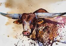 Bull. Animal Illustration. Watercolor Hand Drawn Series Of Cattle. Watusi Bull Breeds