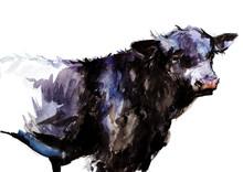 Bull. Animal Illustration. Watercolor Hand Drawn Series Of Cattle Animal. Welsh Black Breeds