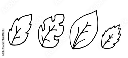 Hand drawn doodle of tree leaves. Simple thick black line. birch, palm and Hawaii leaves.