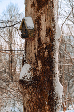 Wooden Booth On A Tree Trunk In Winter.