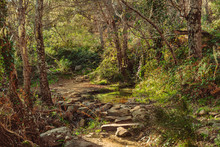 Honey River Footpath In Algeciras, Cadiz, Spain